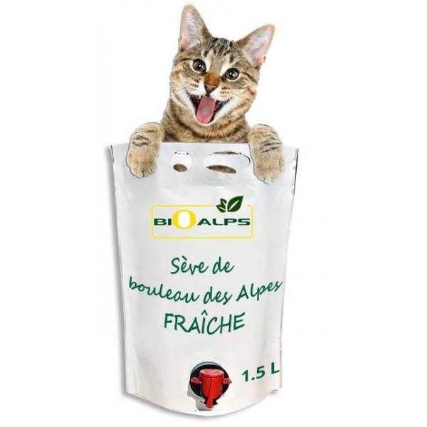 Sève de bouleau pour votre chat